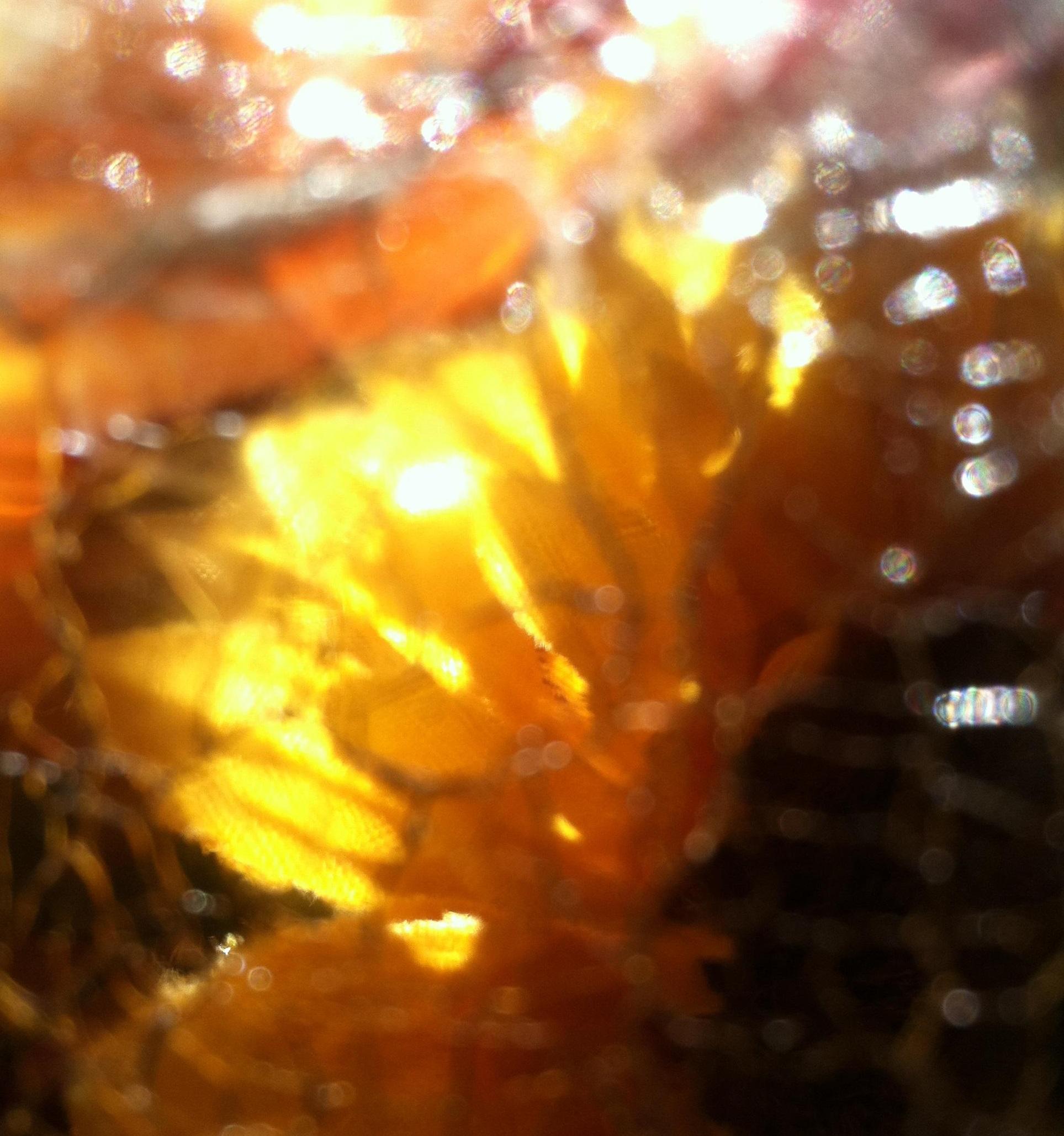 Natural Sun Glow Glass Reflections MGD© - Copie